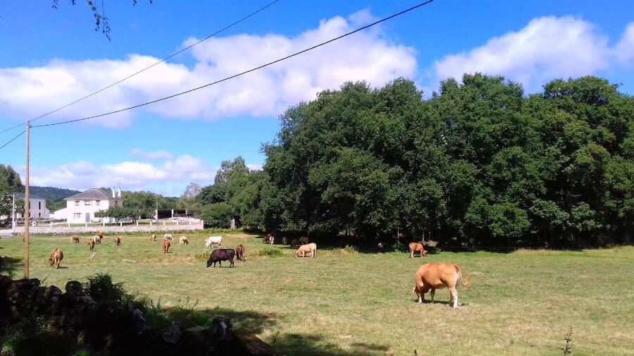 Miraz, Lugo - Camino del Norte :: Albergues del Camino de Santiago