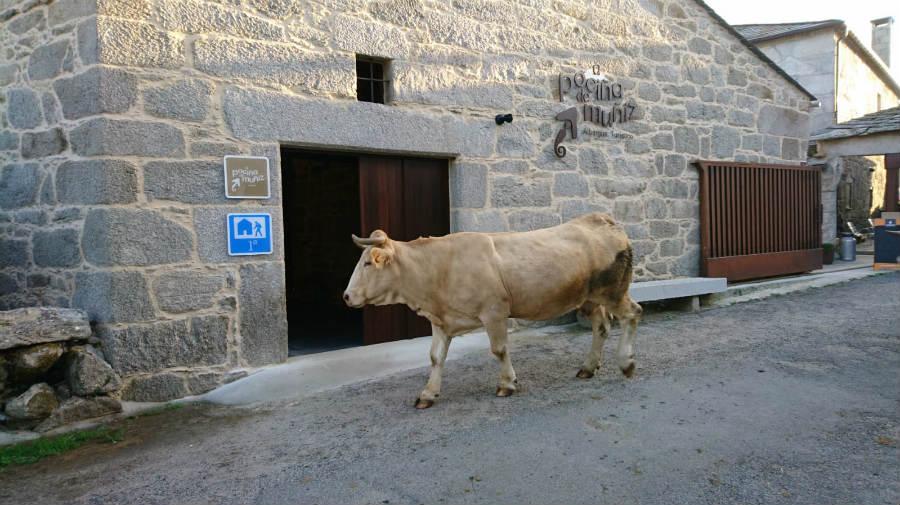 Albergue A Pociña de Muñiz, Vilar de Cas, Lugo - Camino Primitivo :: Albergues del Camino de Santiago