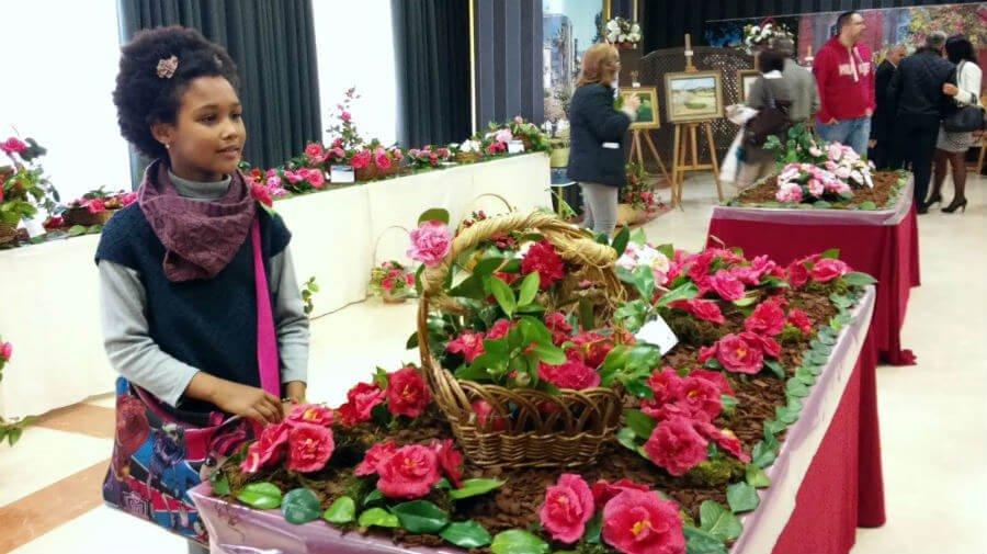 Las mejores camelias del Camino Portugués se exhiben el albergue de Pontevedra